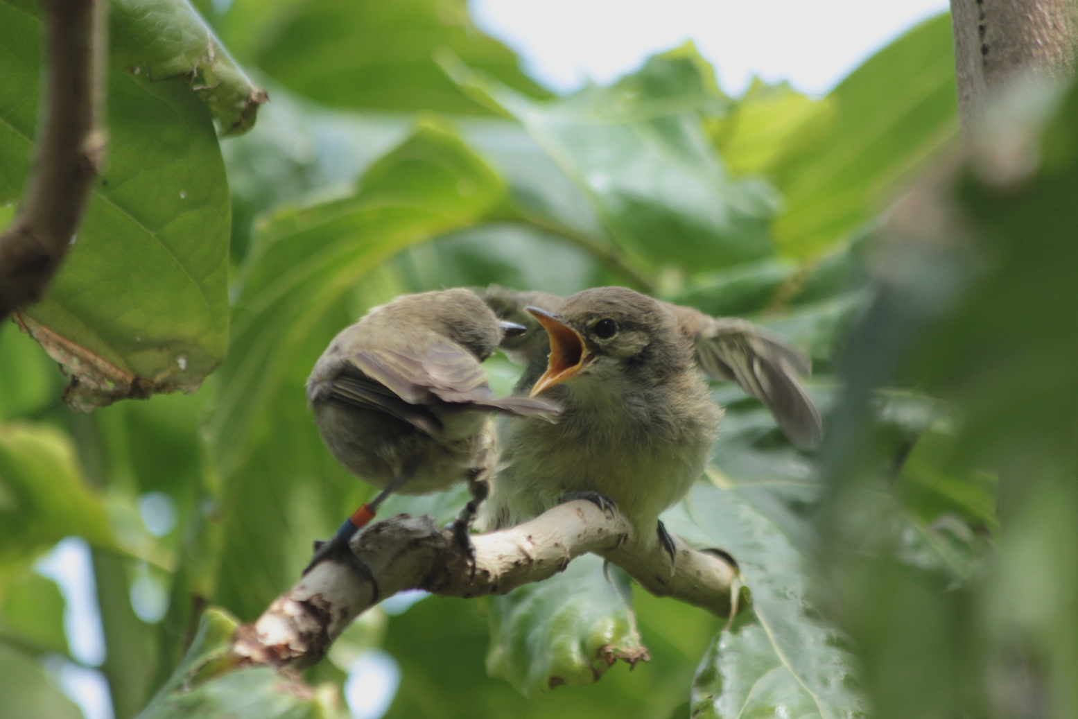 According to a new study, birds may care for the offspring of other birds when they are hoping for future rewards.