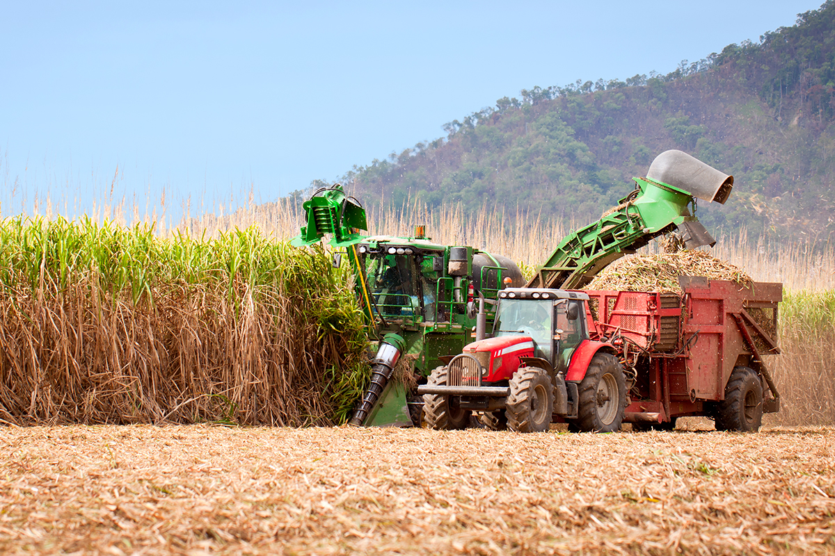Unlike the U.S., Brazil uses almost all of its sugarcane crop, from extracting ethanol from the sugar to burning the stem remnants for energy.