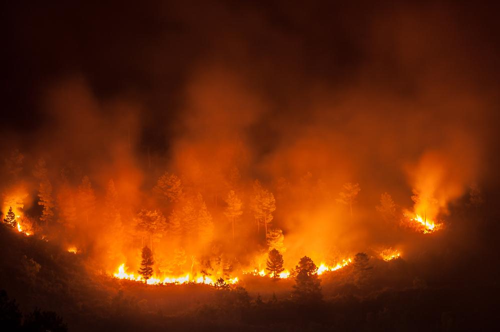 Miramichi Fire