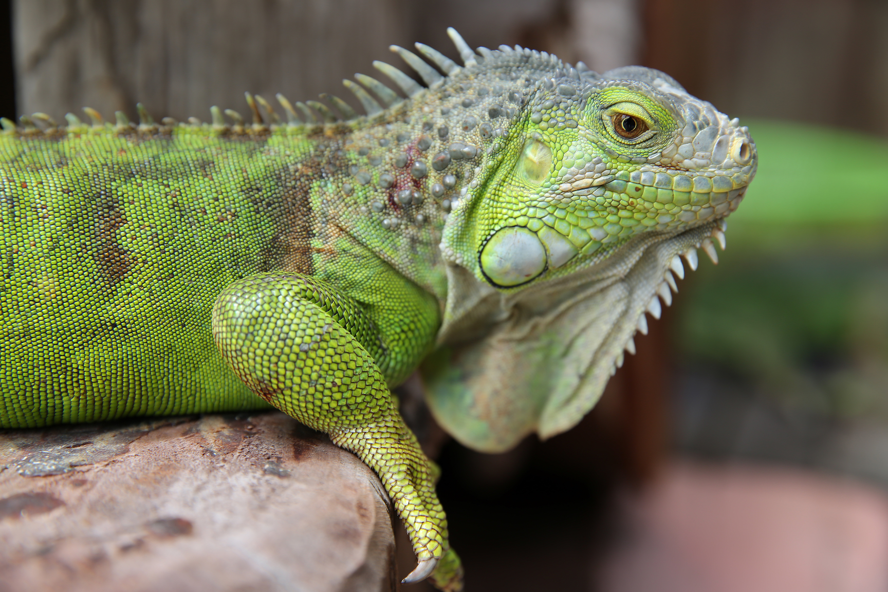 It has become increasingly popular to keep exotic pets such as reptiles and amphibians. But this can pose problems for ill-equipped owners.