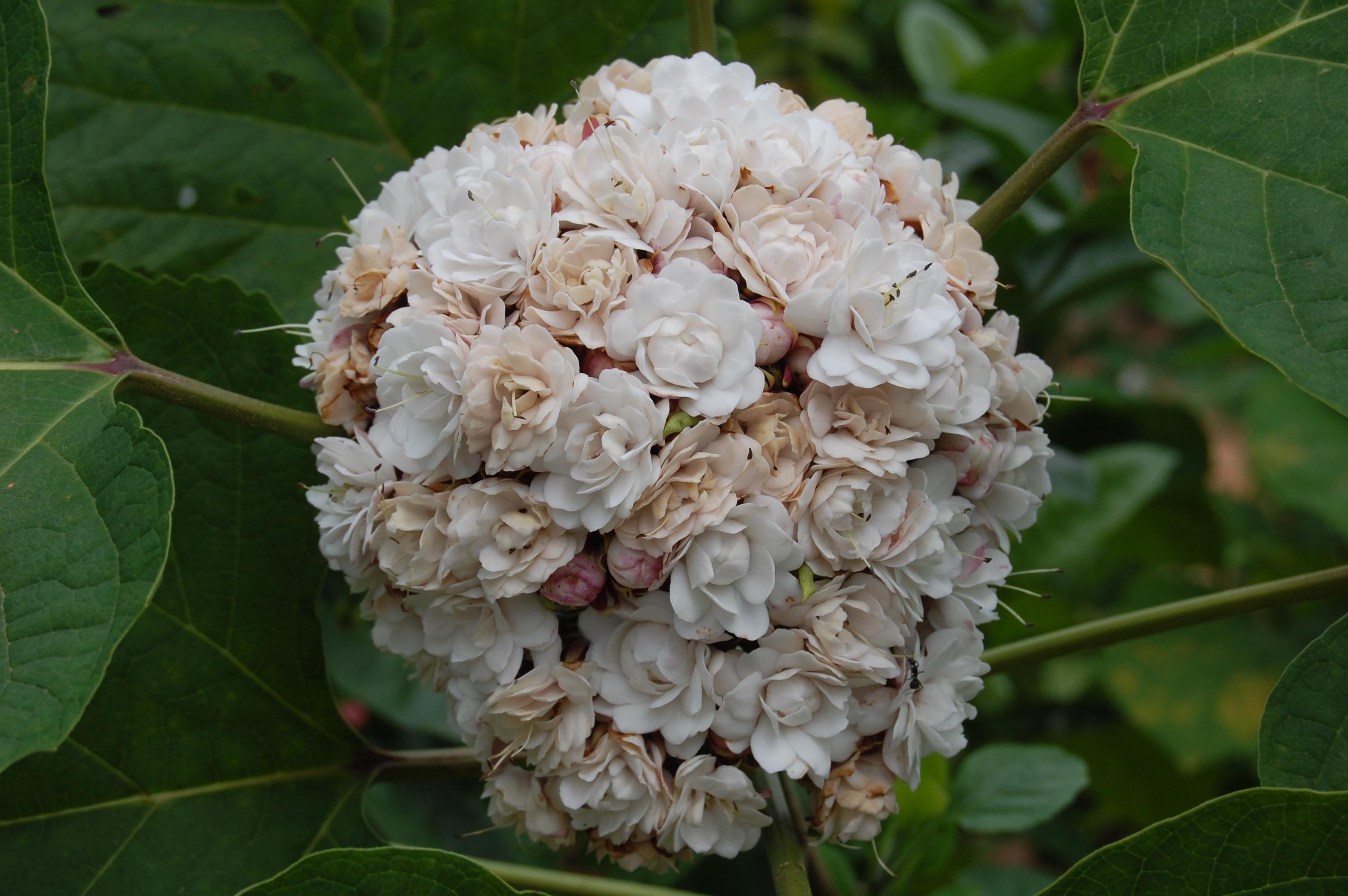 Cashmere Bouquet Flower Images - Flower Wallpaper HD