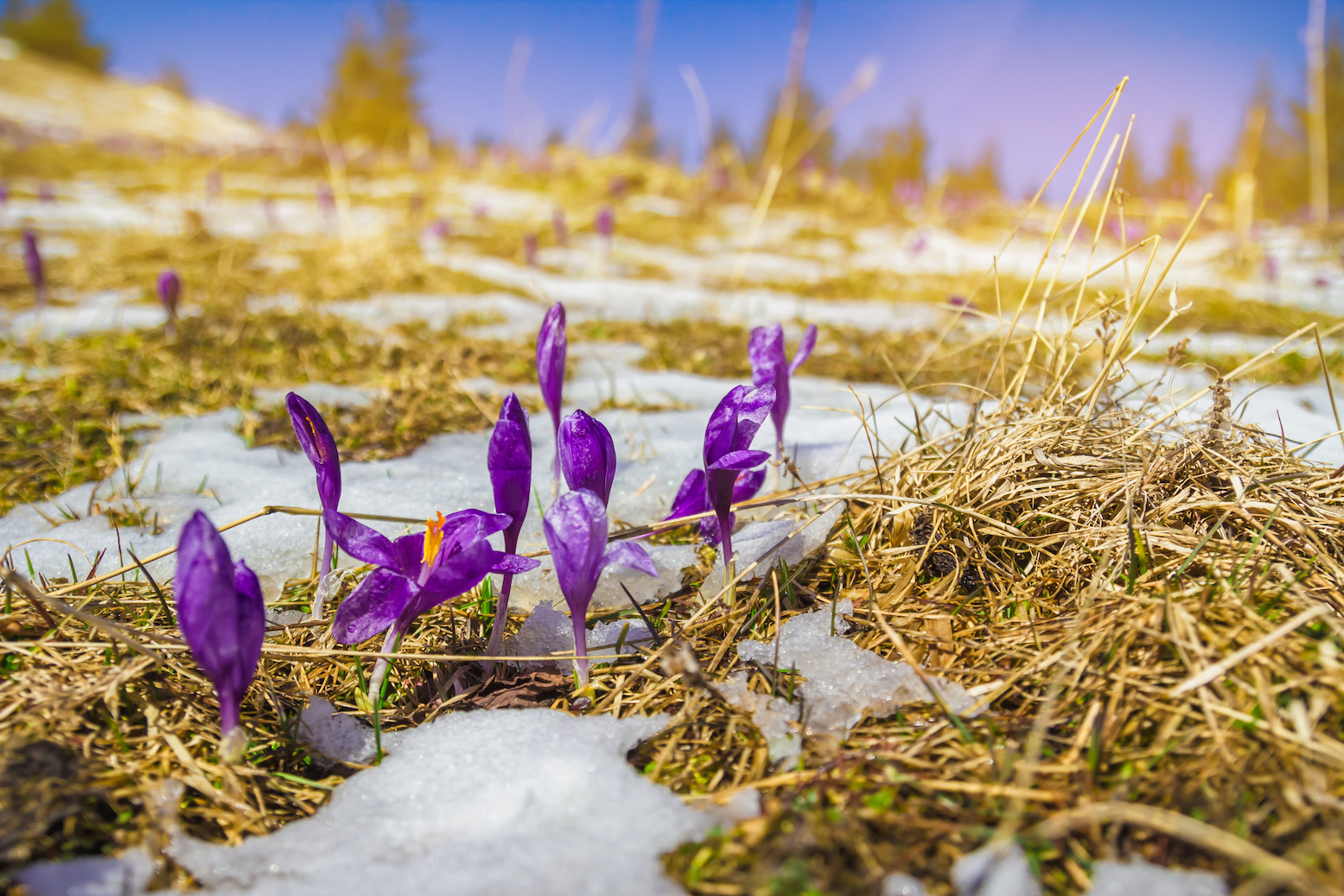 A new study has found that early spring and melting snow in forests might actually help in mitigating climate change.