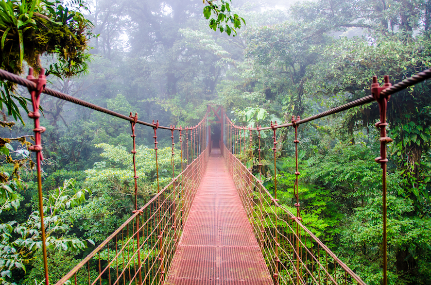 In an effort to help battle deforestation of these unique treasures,Earth.com brings you the top 10 rainforests you have to see!