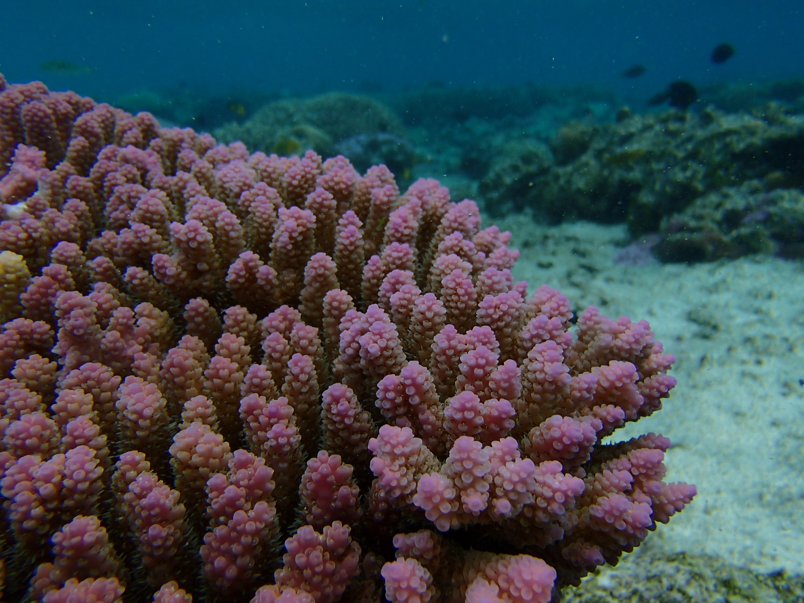A new study has found that corals might be able to adapt to warming waters, but only if greenhouse gas emissions are reduced.