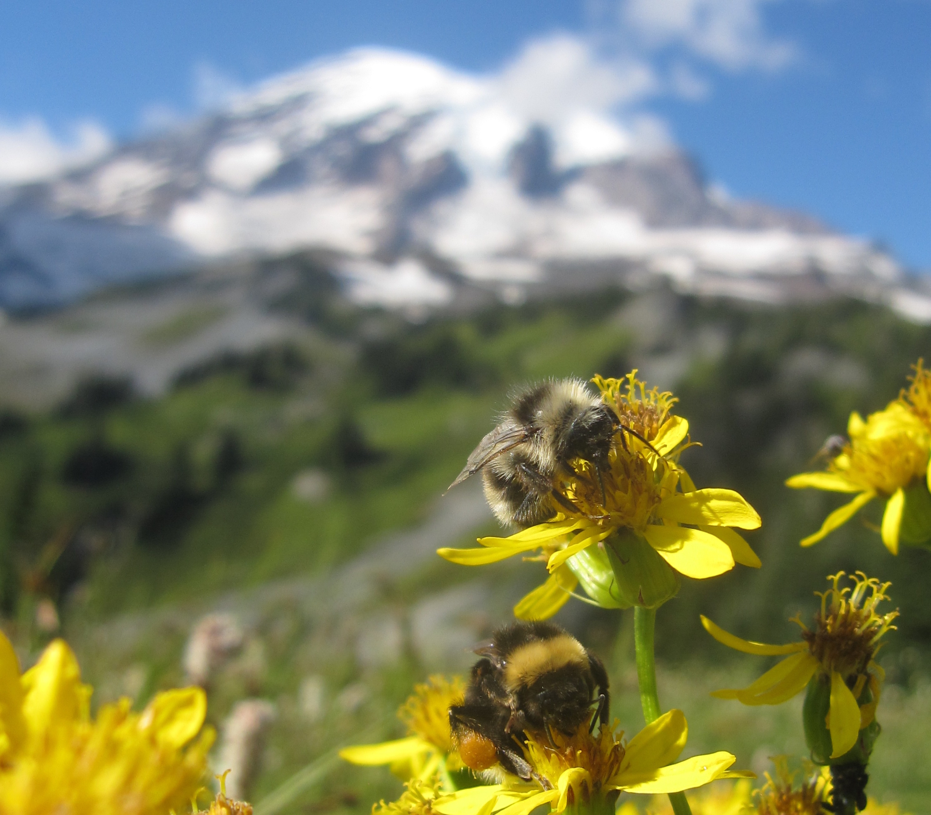 Today's Video of the Day comes from the University of Washington and features a look at how climate change is already impacting wildflowers.