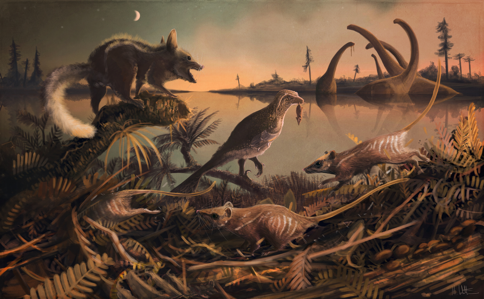 Researchers have confirmed that fossils discovered on southern England's Jurassic Coast belonged humankind's earliest known mammal ancestors.