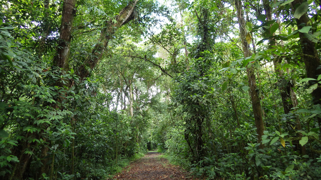 Letting nature take its course might be the best way for restoring biodiversity in tropical forests, a new study has found.