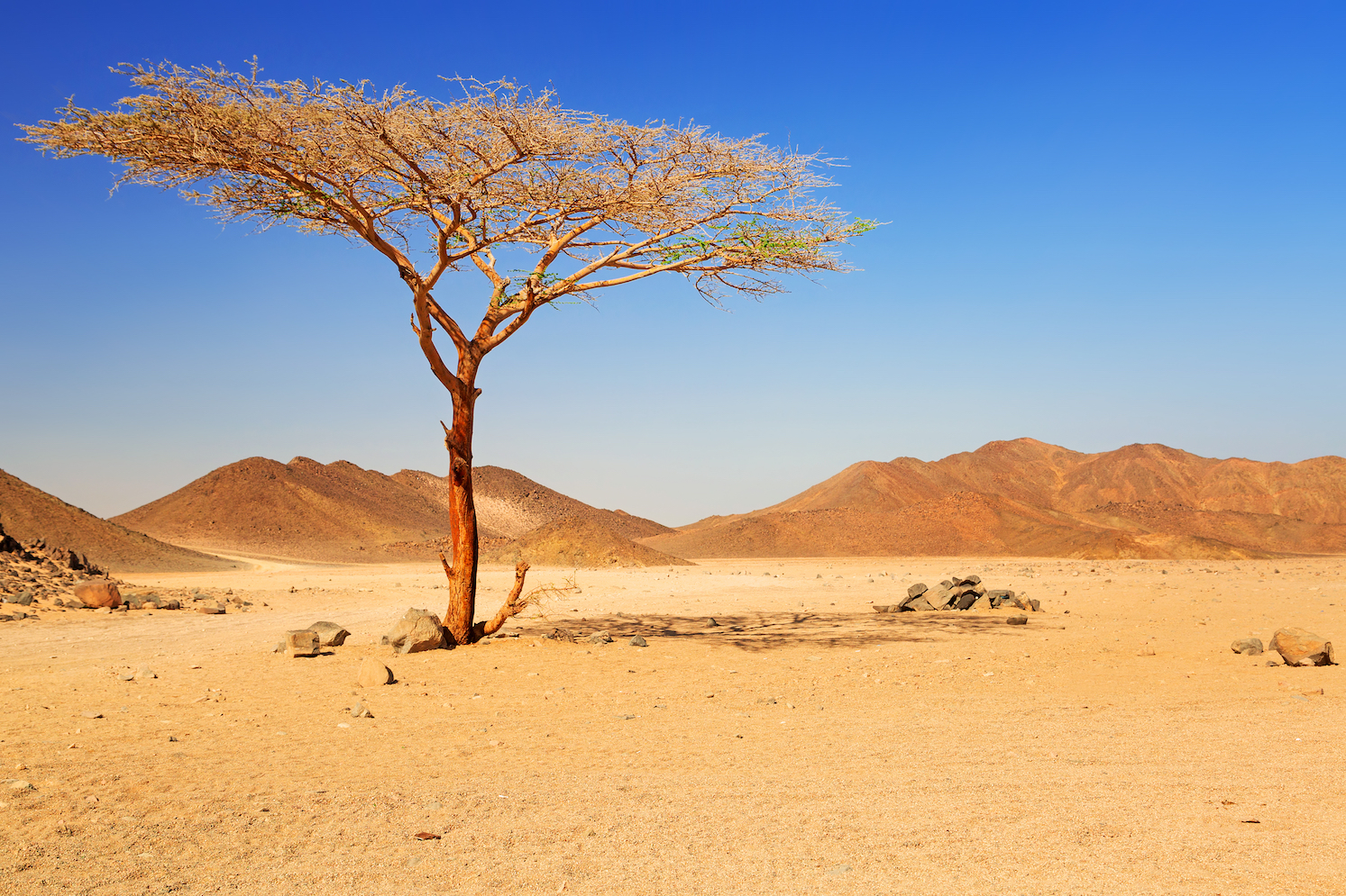 Today, the African Sahara one of the driest places on Earth. But thousands of years ago, northern Africa experienced a wet and humid period,
