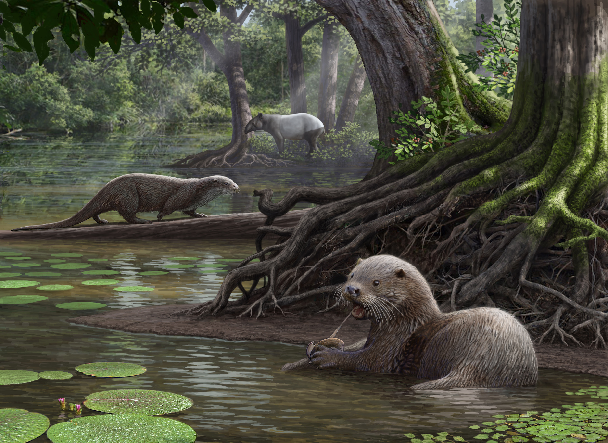 Researchers believe that an enormous otter which lived about 6 million years ago may have been a top predator in its day.