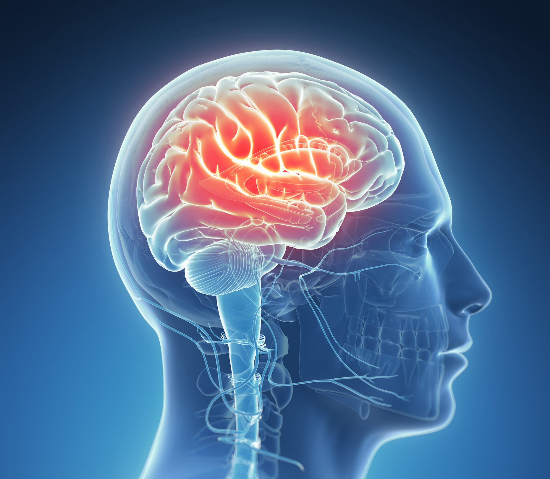 A recent study has shown that the number of brain cells – like neurons and glial cells – increases initially as we learn.