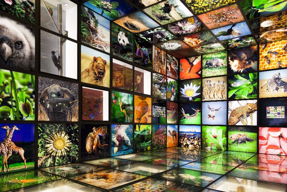 Inside the 'Torre Madariaga' multimedia biodiversity showroom in Urdaibai, Spain. The rise of diverse life on Earth corresponds with a spike in oxygen levels, a new study shows.