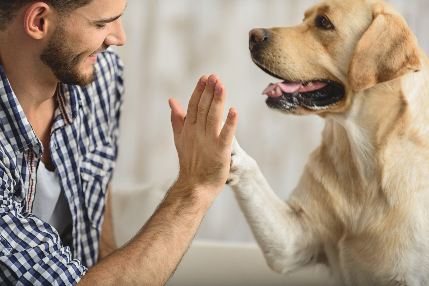 New research has found that dogs also become much more interested in looking at happy human faces with a smile, as opposed to angry ones.