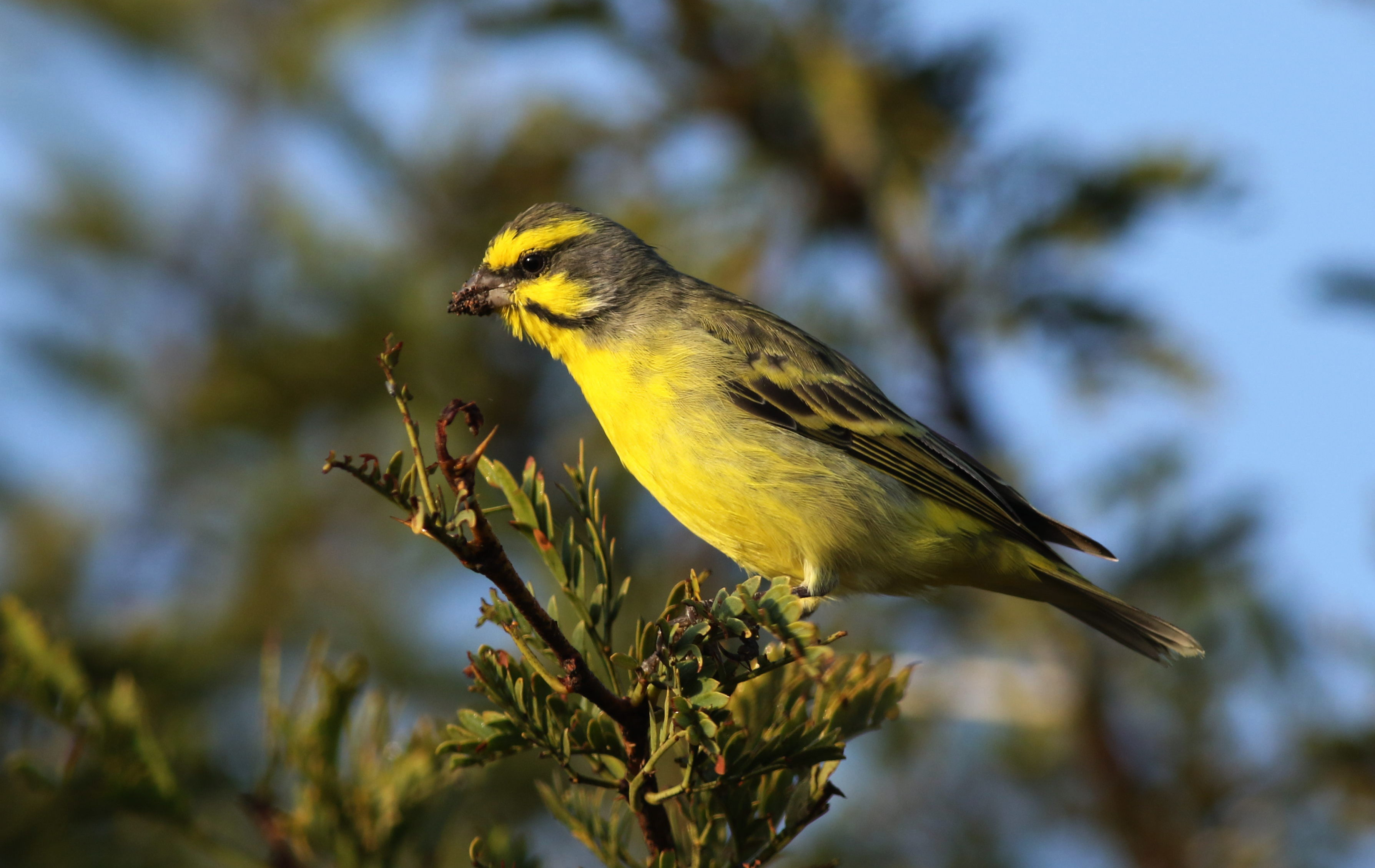 A new study shows that the trade of wild birds has dropped roughly 90 percent globally since the European Union banned the practice in 2005.