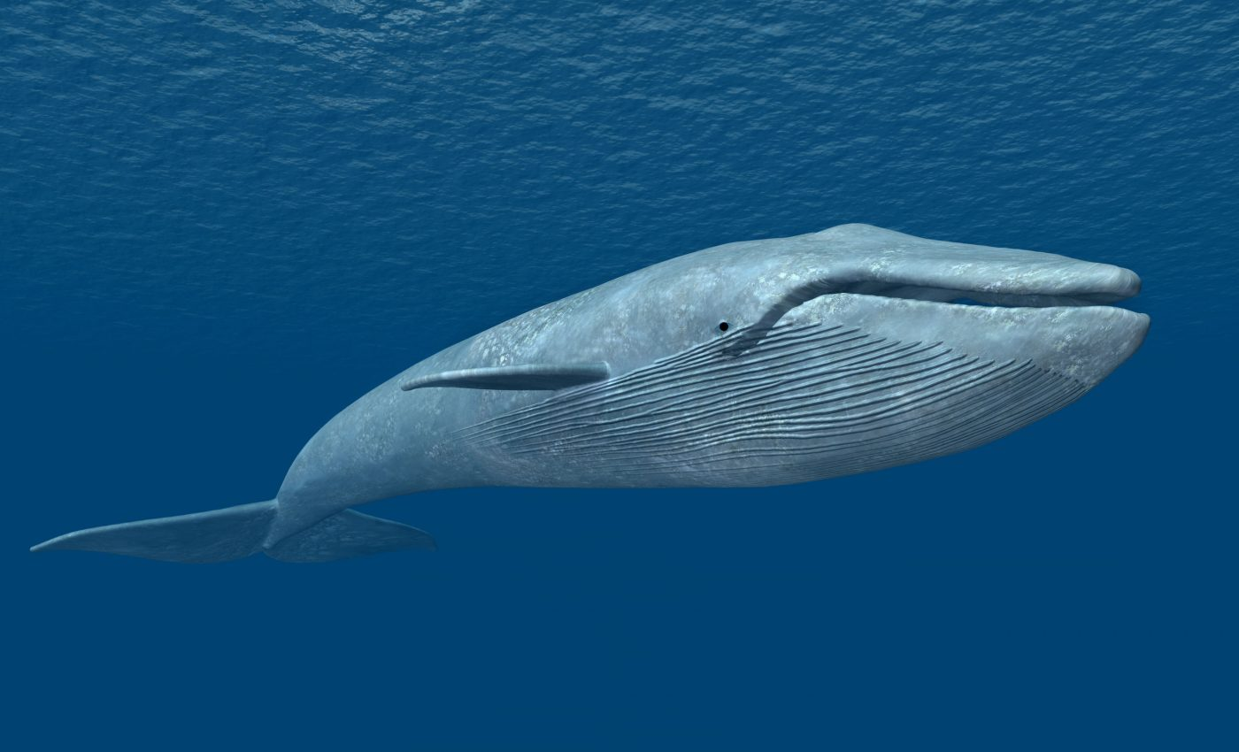 10 of the largest animals on Earth