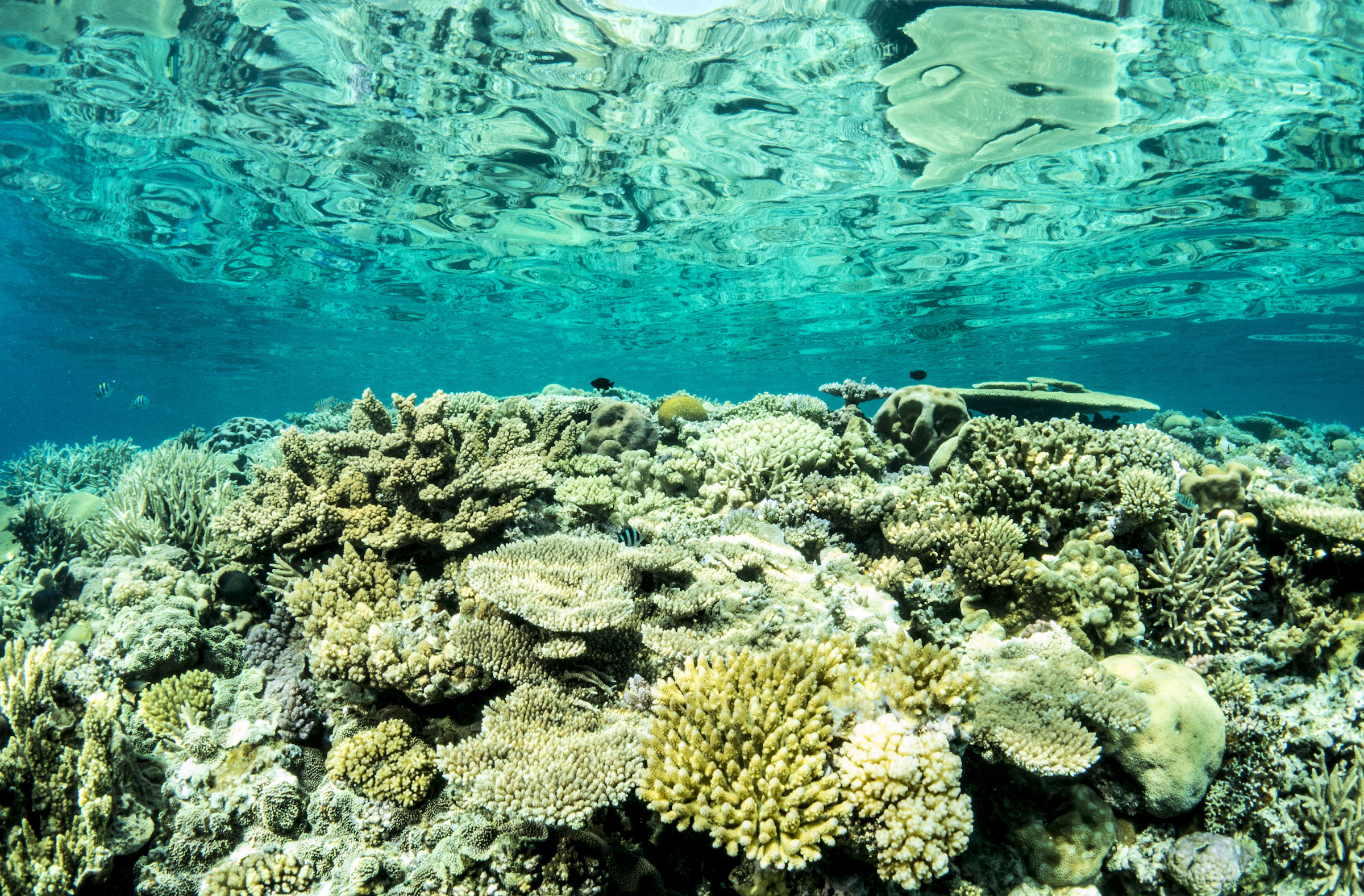 A new study has found that a small portion of the Great Barrier Reef could help boost widespread reef recovery and regeneration.
