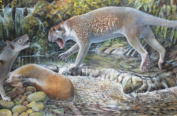 A new species of marsupial lion that has been extinct for 19 million years was recently discovered in a remote part of Queensland, Australia.