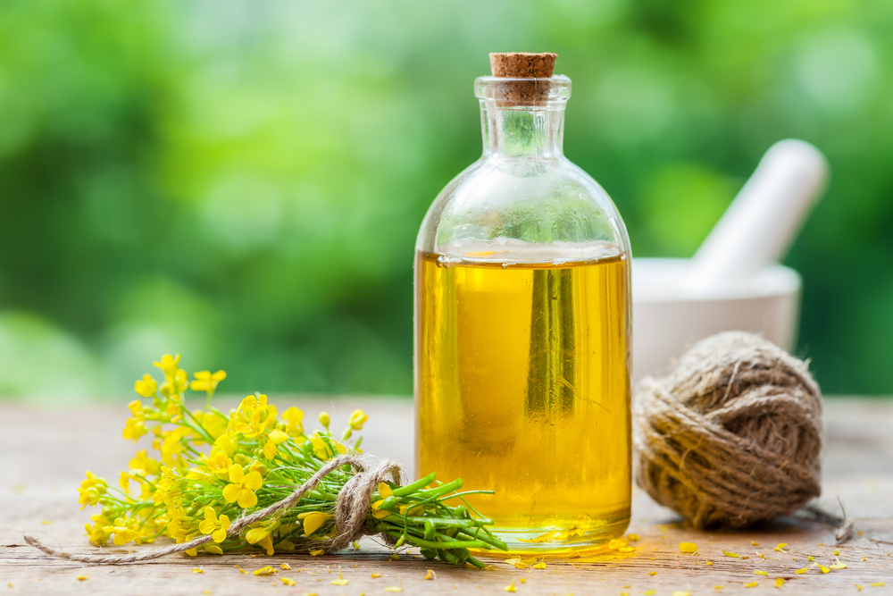 A new study links canola oil to weight gain and a decline in cognitive function.
