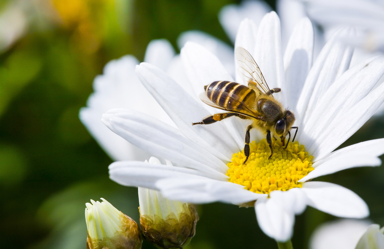 New research from the Queen Mary University of London reveals that bees have a strategy to find the best routes between flowers.
