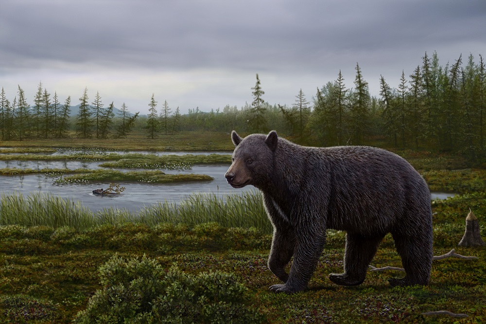 An artist's reconstruction of the ancient bear Protarctos abstrusus. An extinct beaver, Dipoides, is shown carrying a sweet gale branch in water. Plants include black crowberry along the path of the bear, dwarf birch in foreground, sedges in water margins, flowering buckbeans along the mounds behind the beaver, and larch trees in distant background.