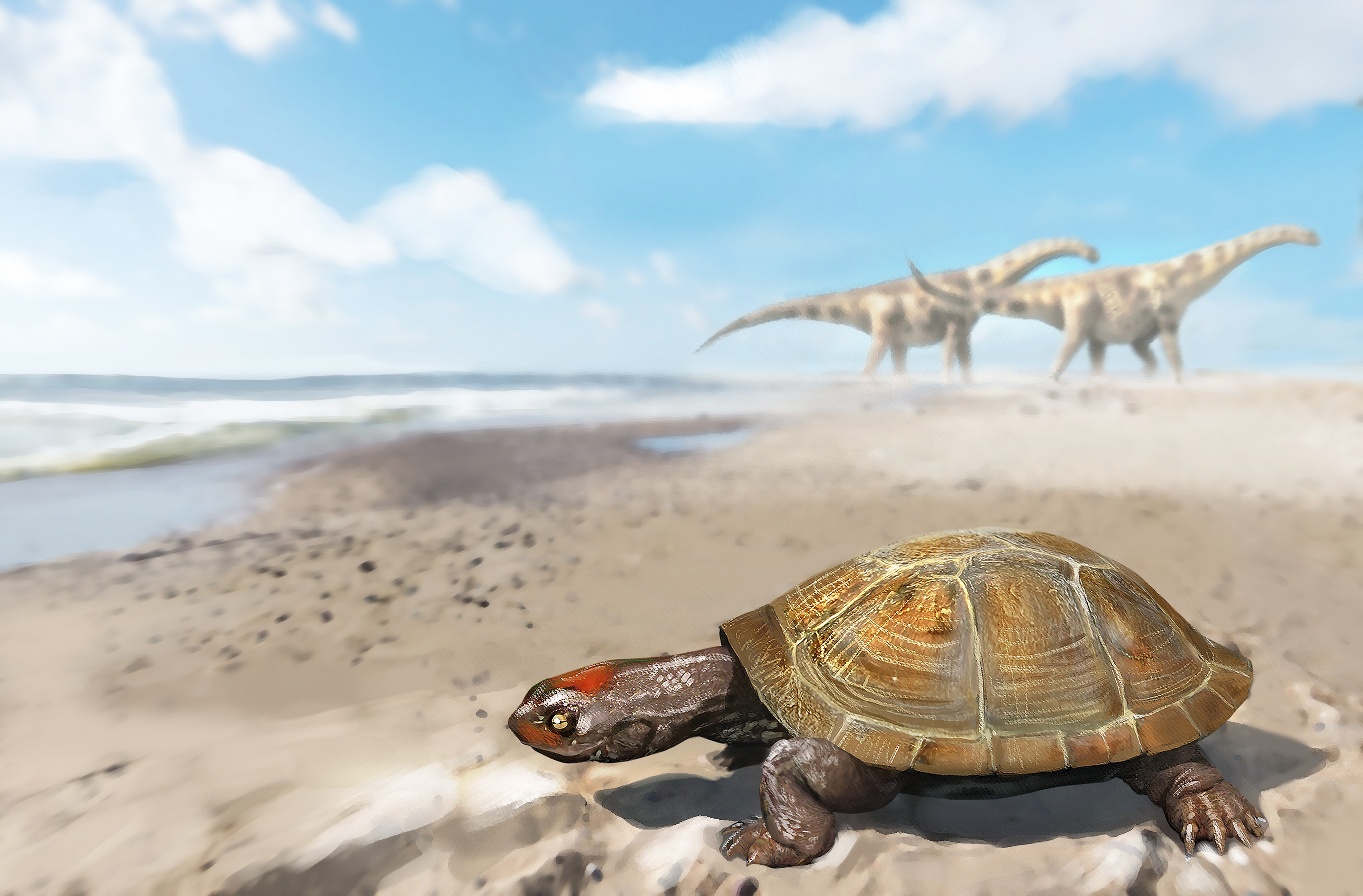 Scientists now have evidence that a river turtle made an incredible journey out of the ancient continent Gondwana 95 million years ago.
