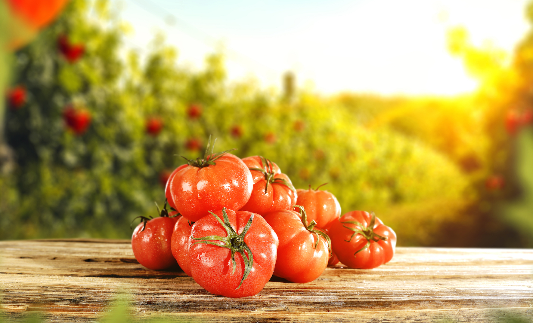 Researchers have revealed that a diet high in tomatoes and fruit can slow down the natural decline in lung function.