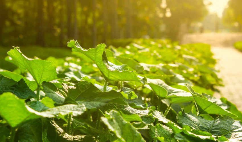 Scientists at McGill University estimate that the basis for photosynthesis as it is known today started 1.25 billion years ago.