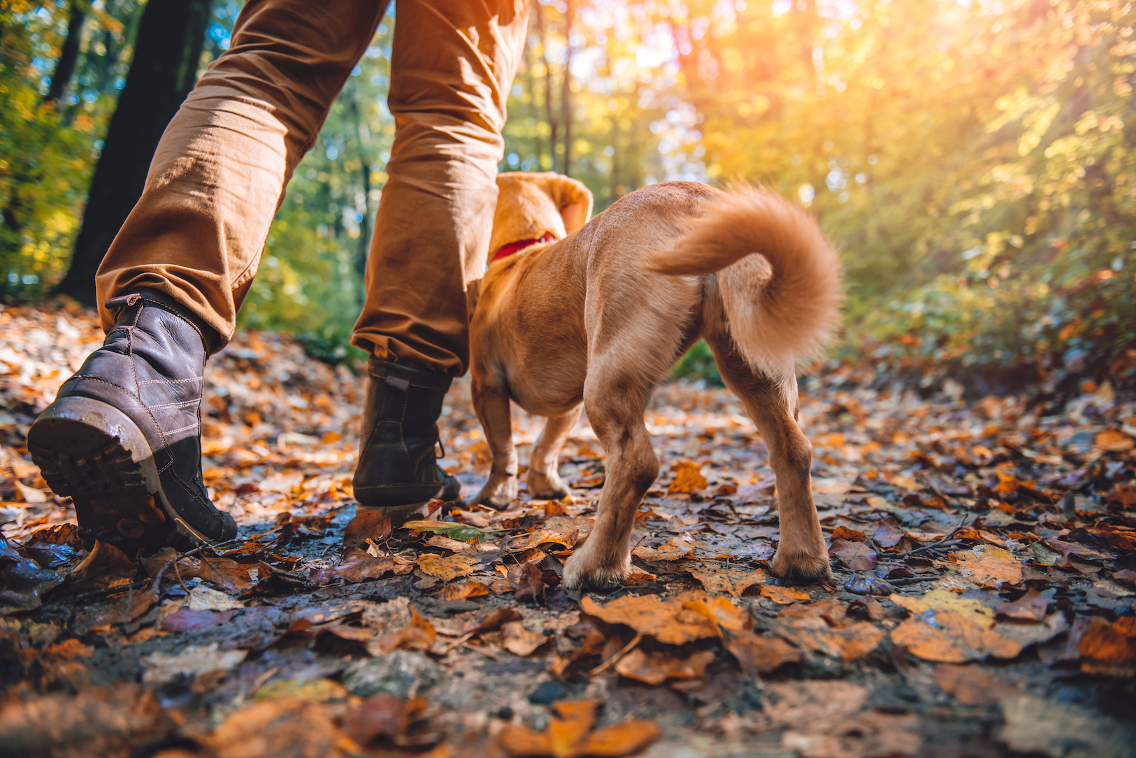 Dogs have long been hiking companions to humans. But as outdoor activities change, should this relationship be reconsidered?