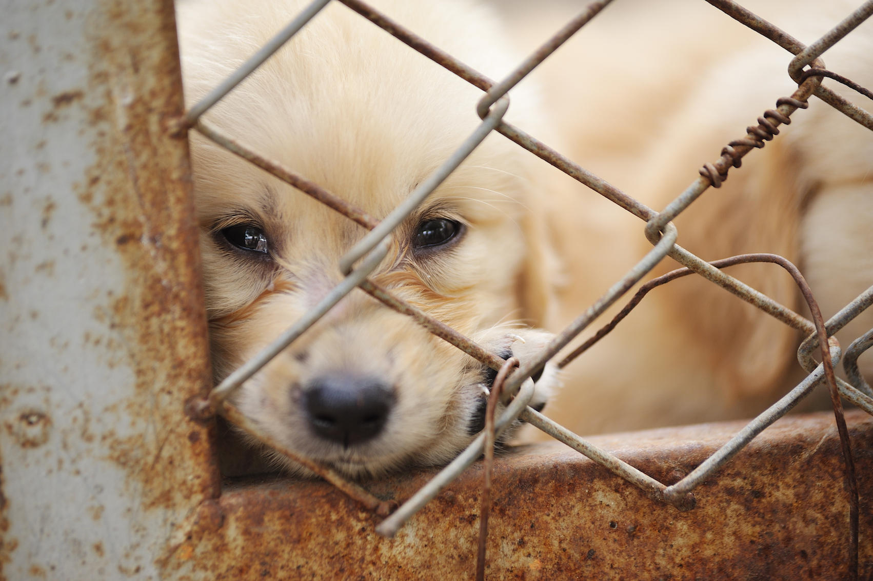 UK Prime Minister Theresa May has vowed to end the inhumane act of puppy farming and mandate that dogs can only be sold by licensed breeders.