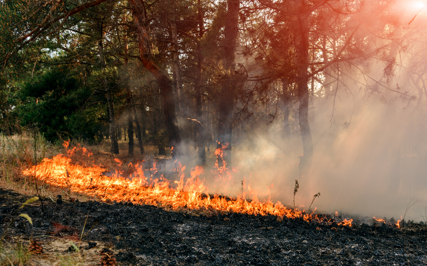 Researchers at NASA have found that wet winters lead to more small wildfires in the fire season that follows.