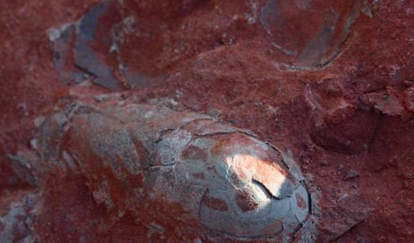 Construction workers in China uncovered a treasure trove of preserved dinosaur eggs that date back to the Cretaceous period.