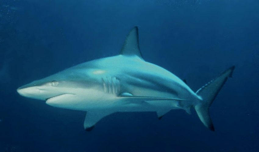A shark off the coast of Taiwan was found to have both male and female reproductive organs, and the genitals were fully formed.