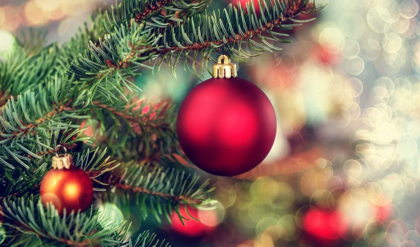 Environmentally friendly ways to get rid of your Christmas tree ...