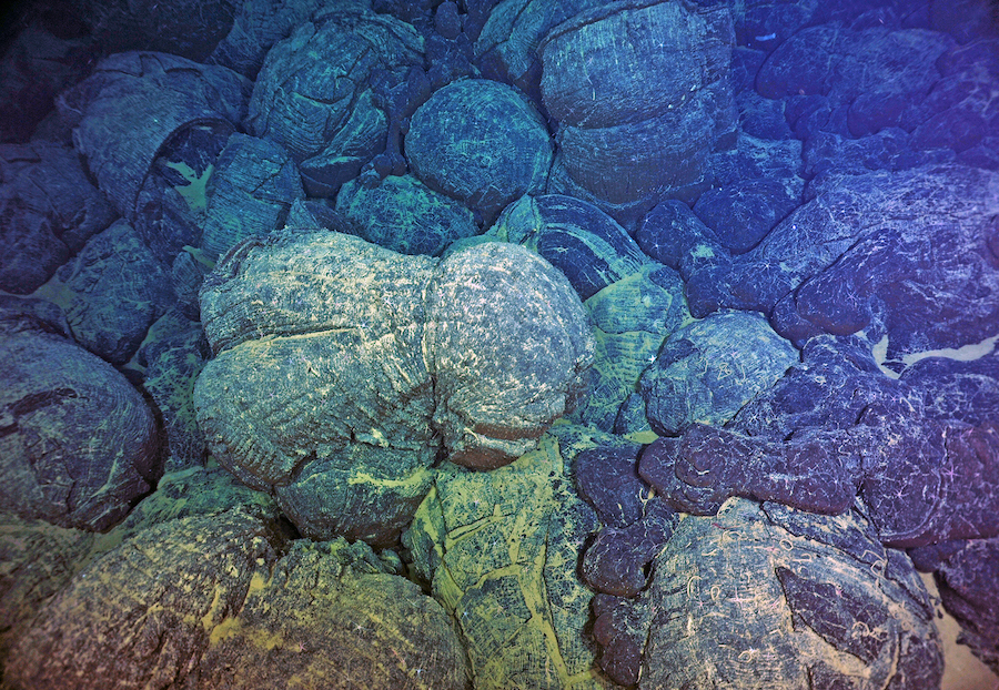 Simple, single-celled organisms evolved hundreds of millions of years before a steep rise in atmospheric oxygen occurred.