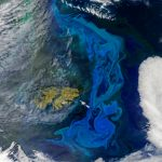 Today's Image of the Day features a look at blue and green phytoplankton blooms in the southern Atlantic Ocean right by the Falkland Islands.