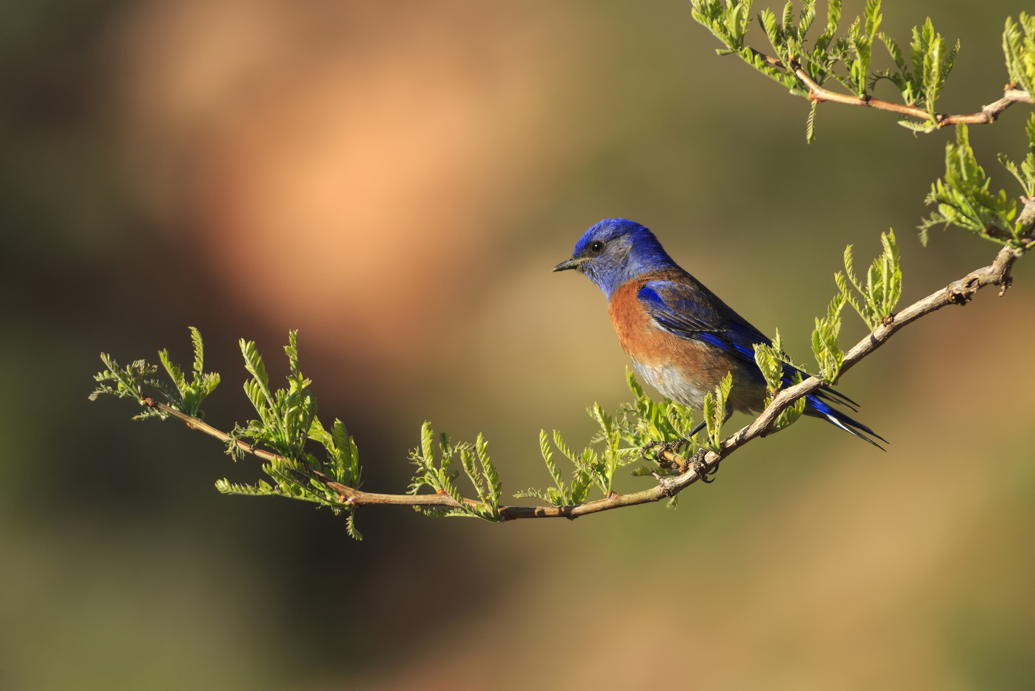 Birds that grow up around high levels of noise pollution have stunted growth and lay fewer eggs that hatch when nesting.