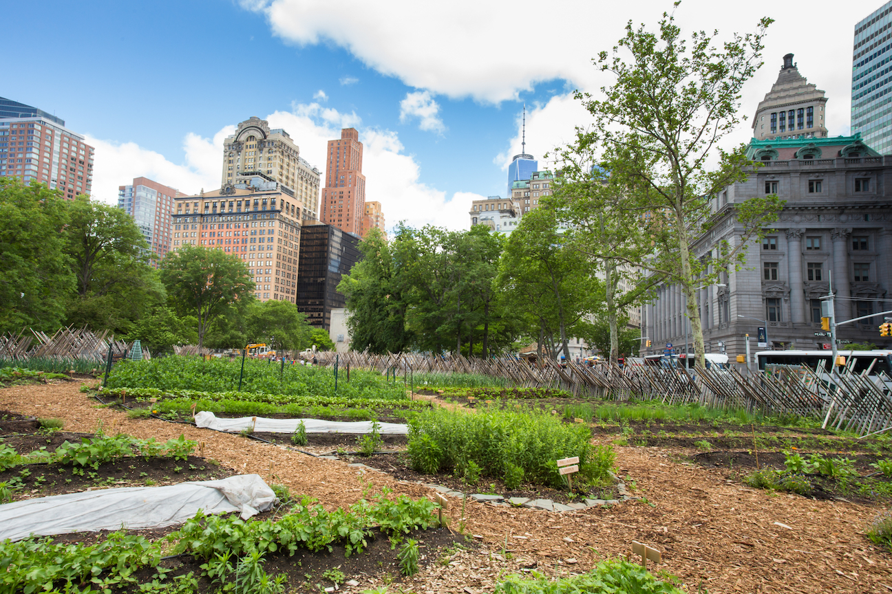 If urban agriculture is implemented on a global scale, the overall annual worth is estimated to be as much as $80 to $160 billion.