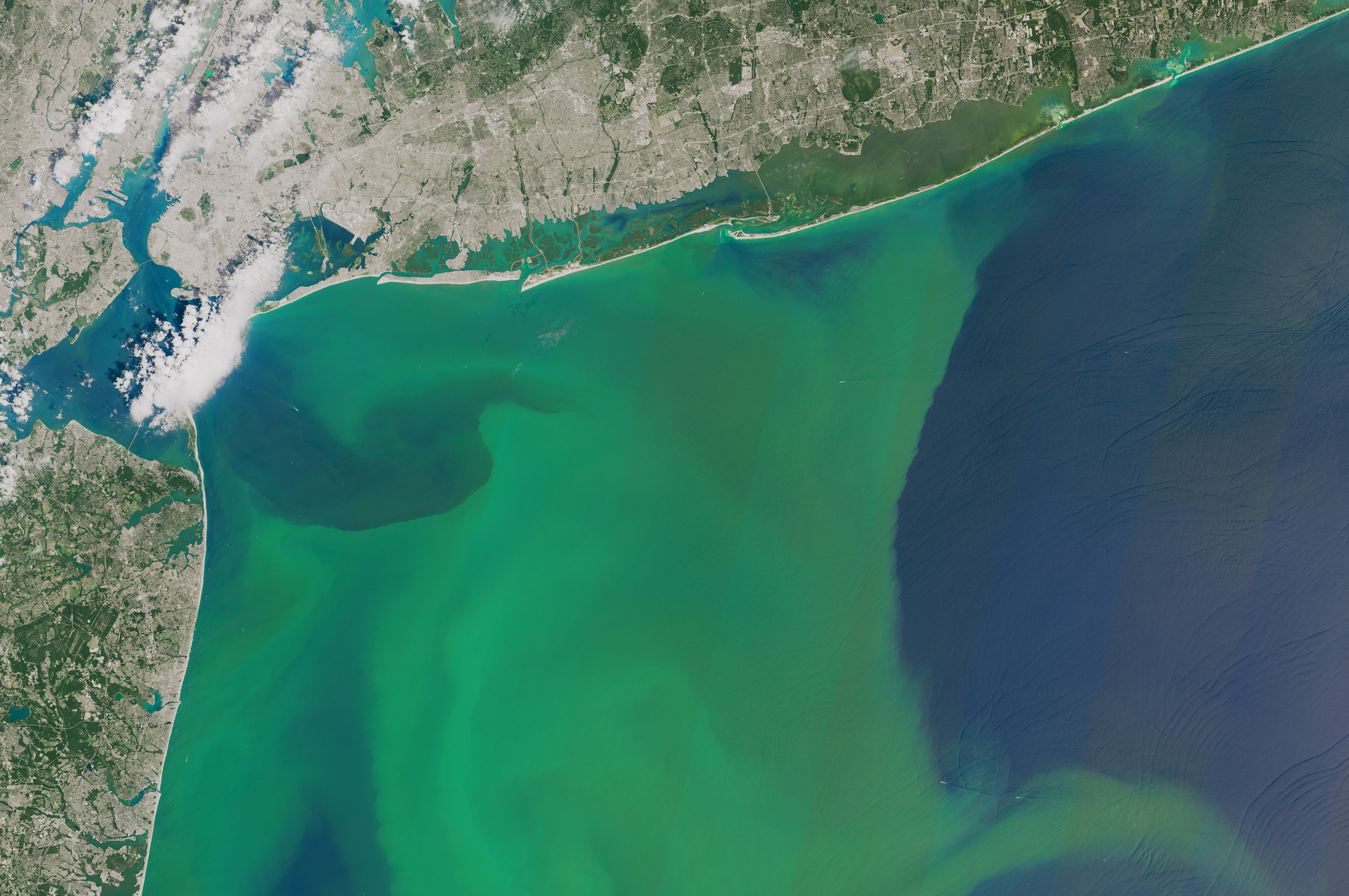 Phytoplankton is a plant microorganism which transforms the inorganic carbon present in the ocean into organic carbon through photosynthesis.