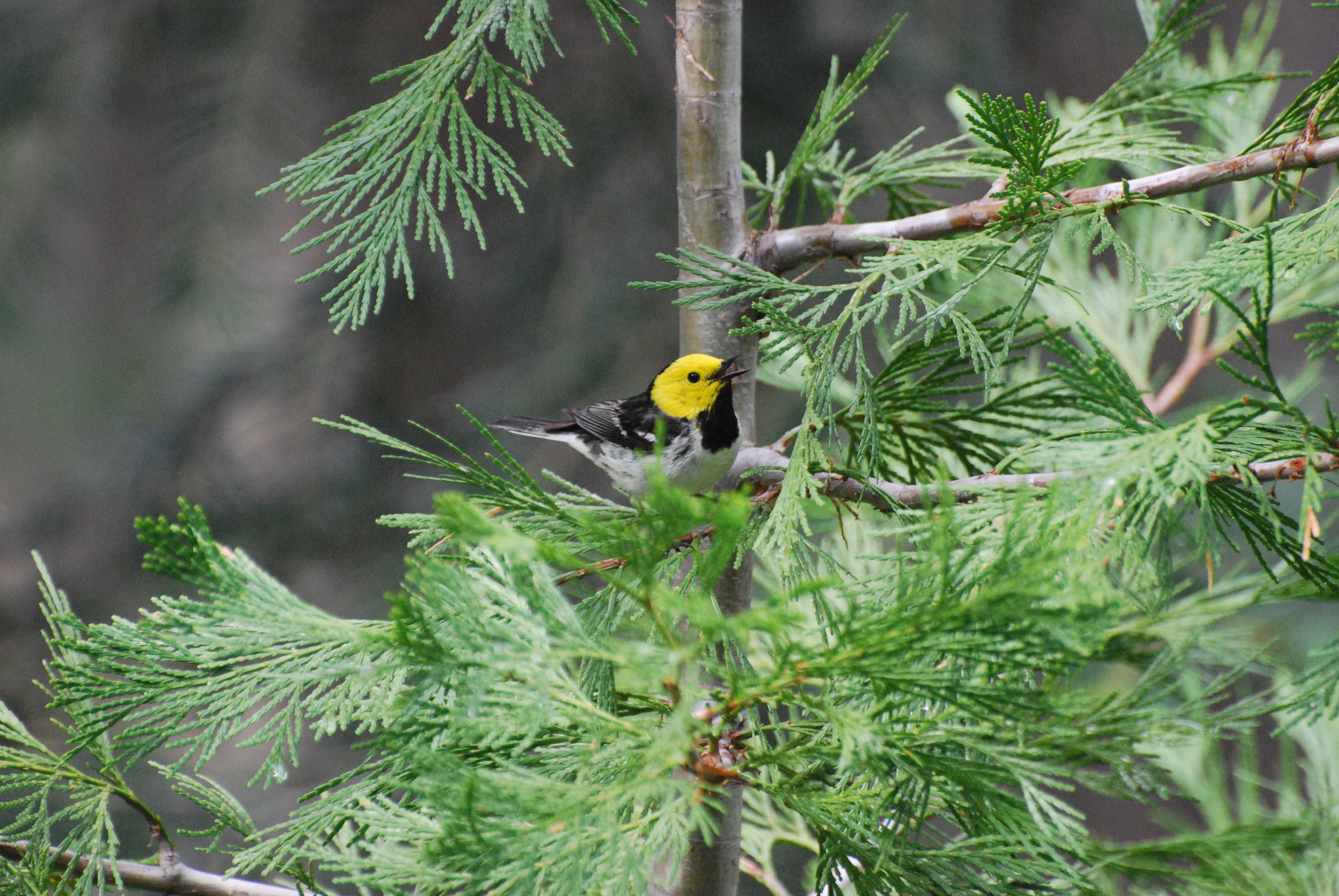 New research has scientists concerned that the annual migration and reproduction of songbirds will be thrown out of sync with the seasons.