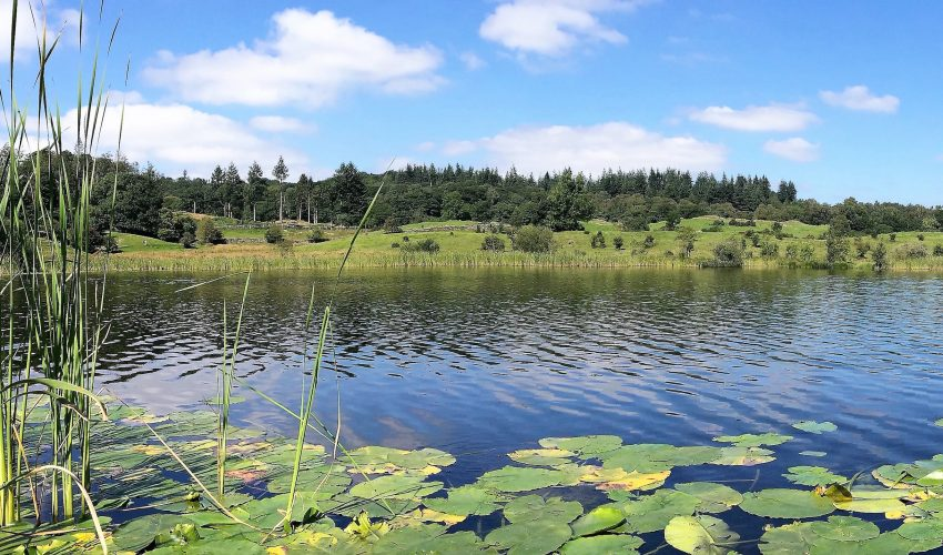 Shallow lakes and ponds are potential hotspots for increased methane emissions that could contribute to global warming.
