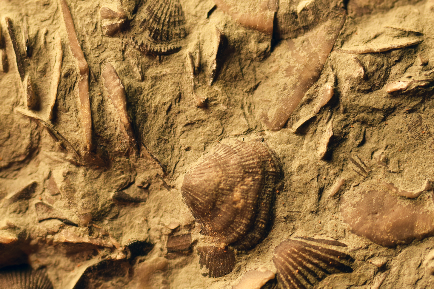 Most seem to think that preparing fossils would be a romantic, adventurous job, but the reality is that it's tedious work.