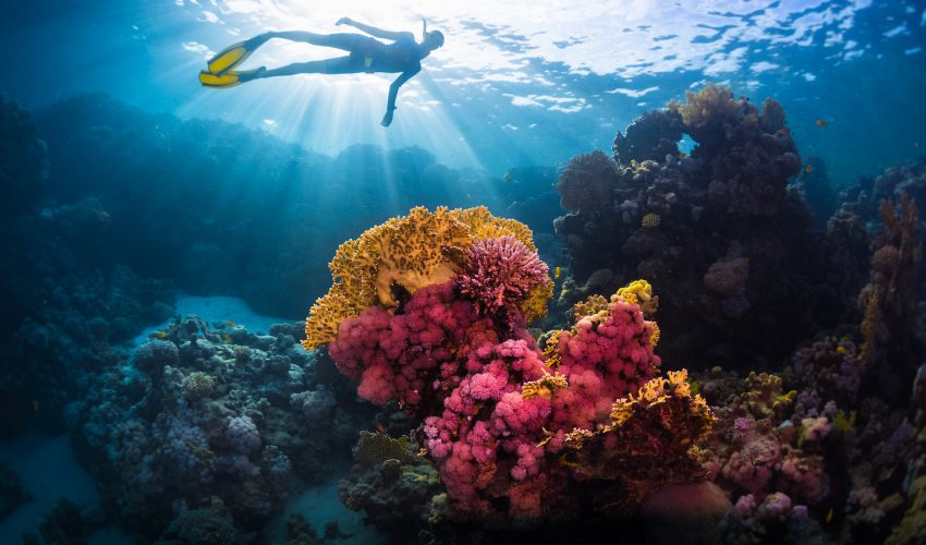Climate change can disrupt the vital balance in coral microbe populations and allow bad bacteria to take over their bodies.