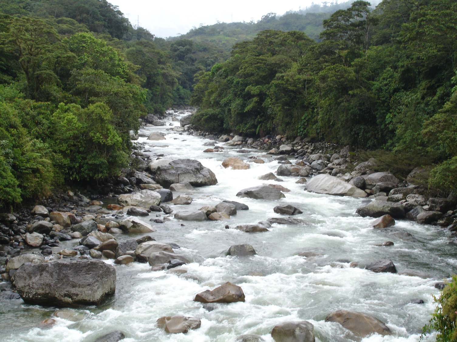A new study has revealed that hydropower dams in the Andes region of the Amazon are disturbing the flow of life within the area's rivers.