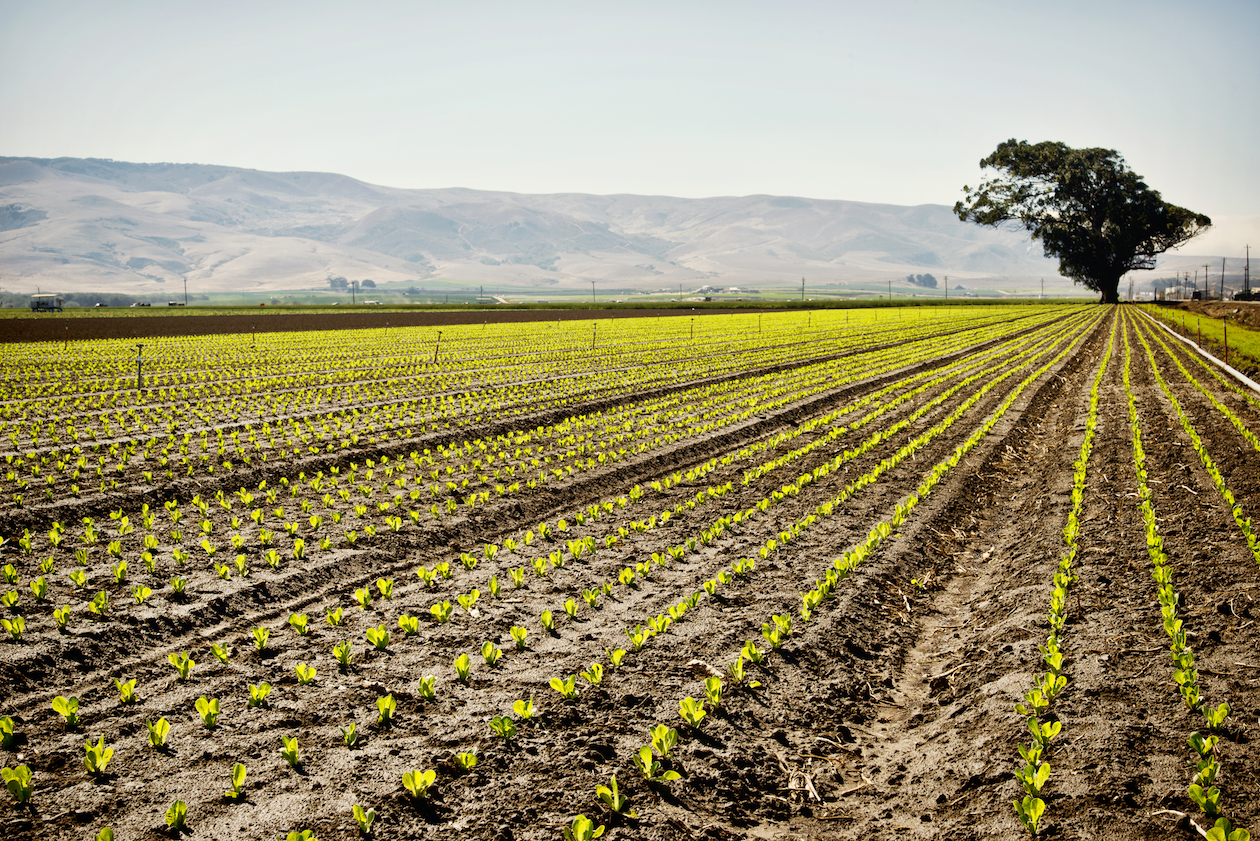 Between 25 and 41 percent of nitrogen oxide emissions in central California come from soil with heavy nitrogen fertilizer applications.