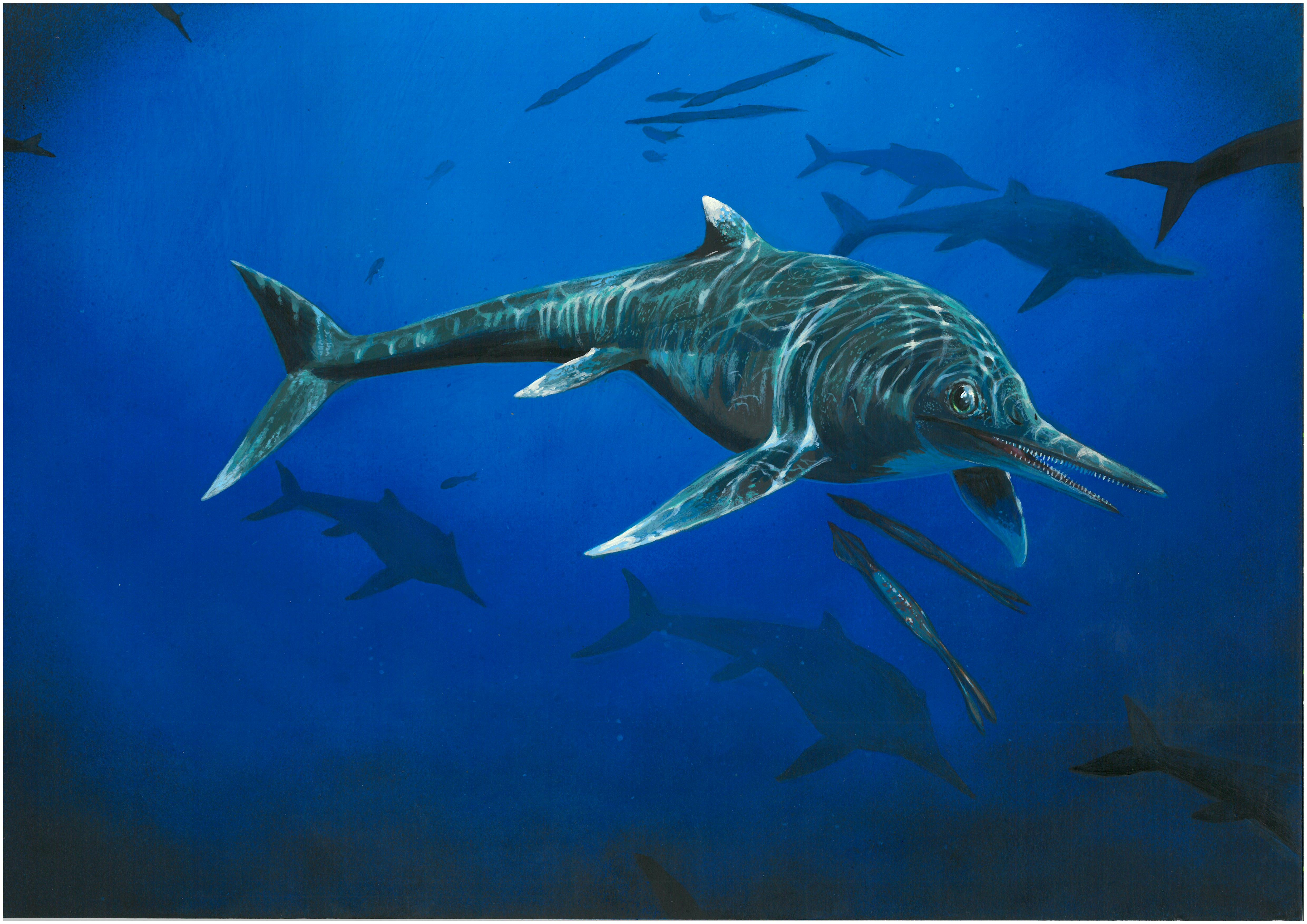 Scientists have identified the remains of a rare 200 million-year-old ichthyosaur sea reptile 22 years after it was first uncovered.