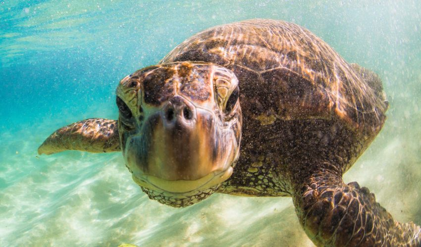 Researchers have found that turtles have a brain that has slowly yet consistently evolved over the last 210 million years.