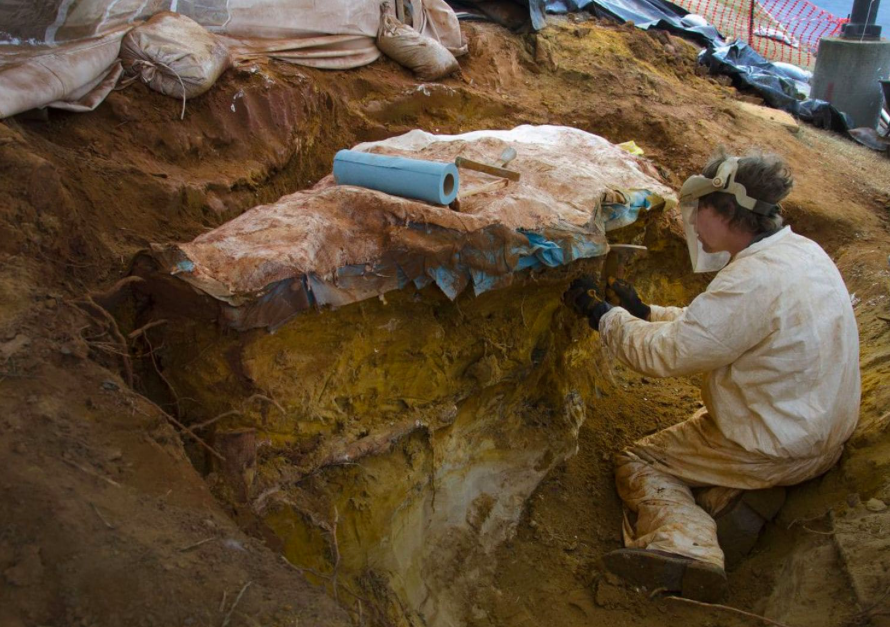 A large chunk of rock discovered in a NASA parking lot has preserved the ancient footprints of at least 70 different mammals and dinosaurs.