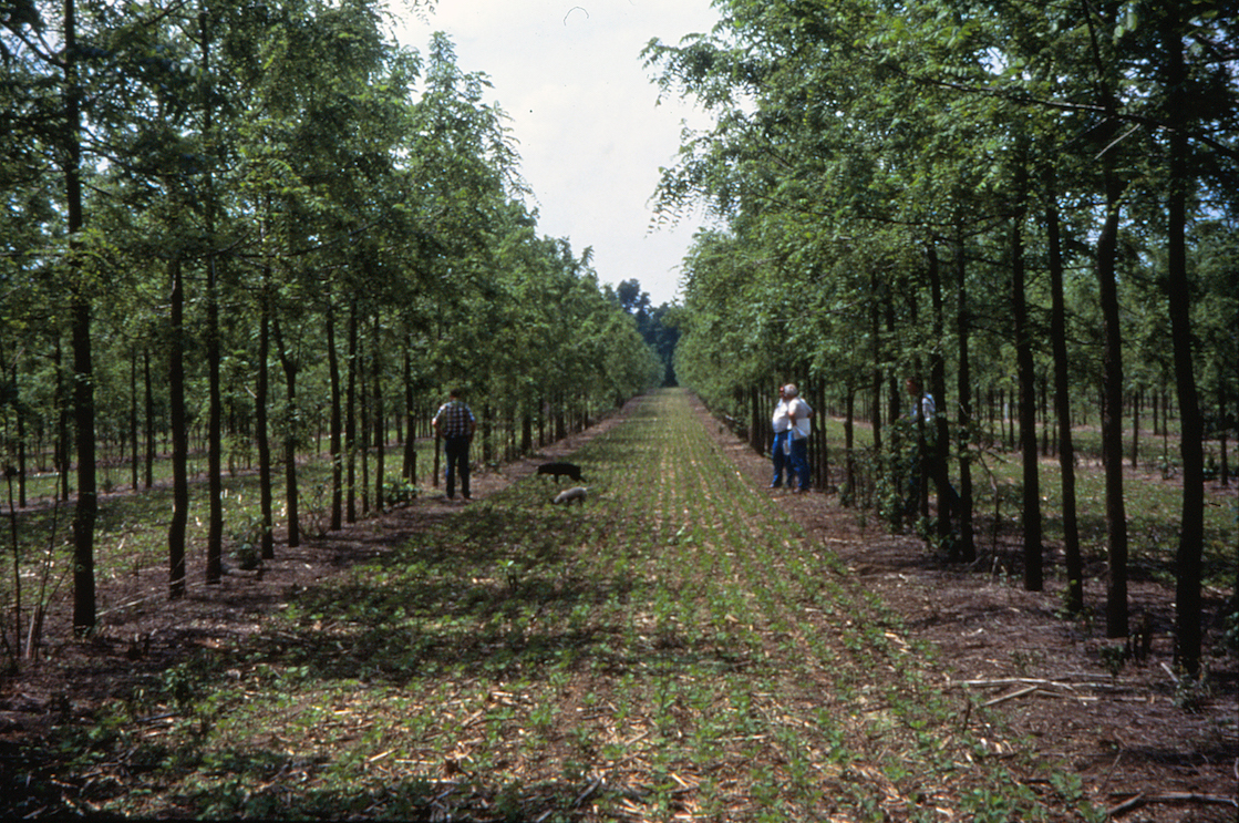 Along with maximizing land use, researchers from Penn State have found that agroforestry could also play a role in mitigating climate change.