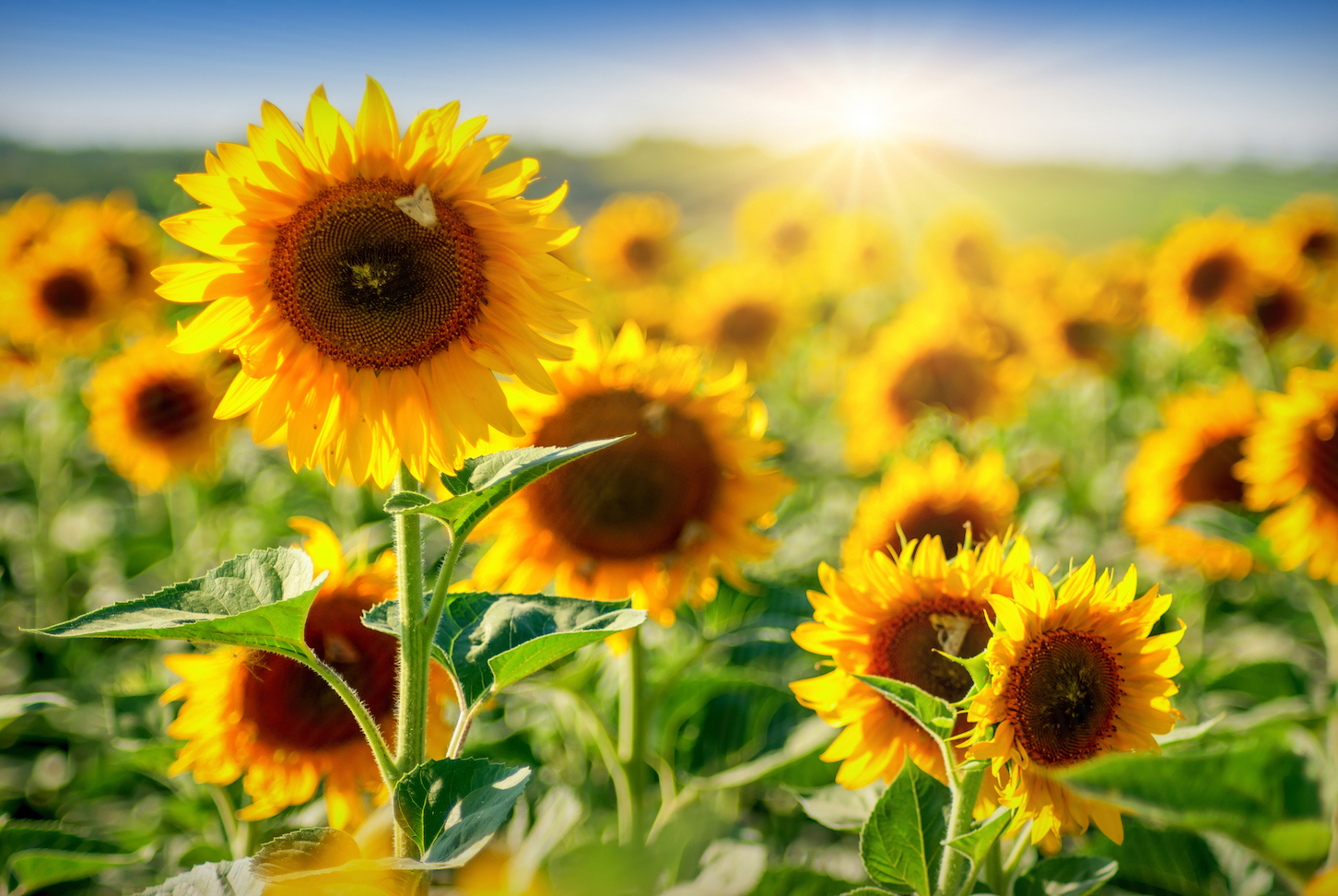 A new study has found that flowers began populating the Earth somewhere between 149 and 256 million years ago.