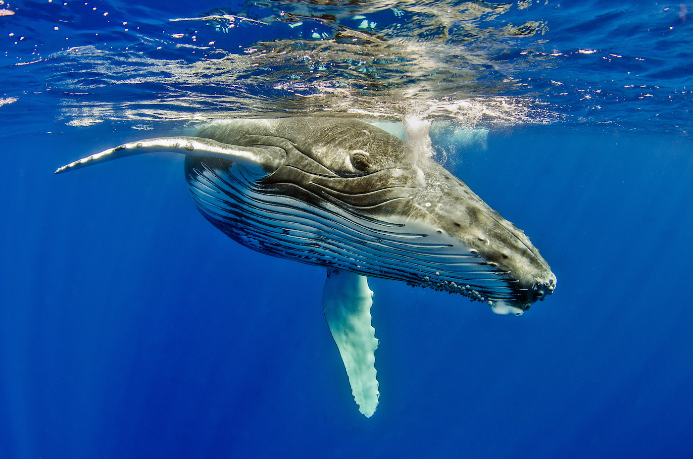 A new report from Murdoch University is warning that microplastics are particularly dangerous for filter-feeding animals such whales.