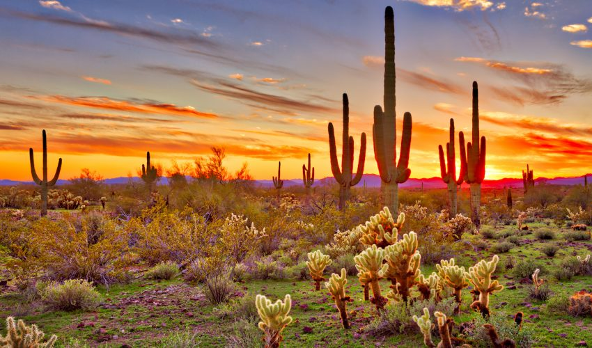 Pictures For Kids Of The Sonoran Desert